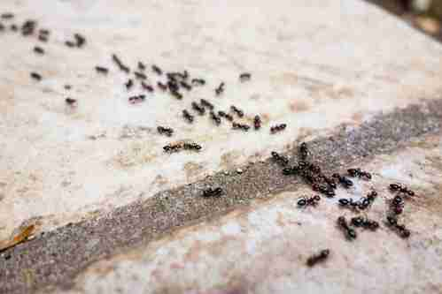 Protect Your Home With Spring Ant Control