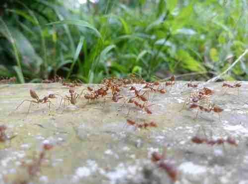 The Benefits of Preventative Pest Control